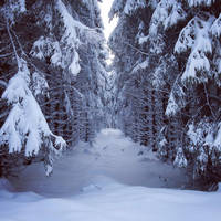 Deep winter by Noirerora