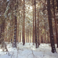 Winterwald by Noirerora