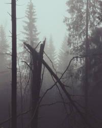 Dark misty woods by Noirerora