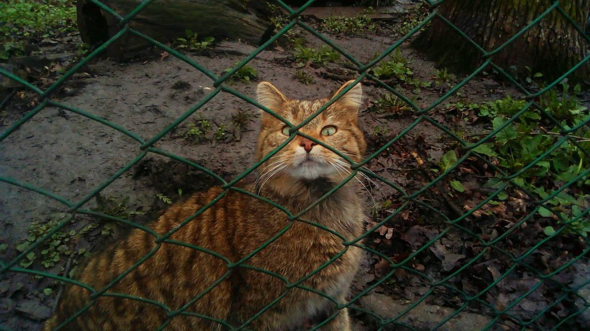 A wild cat.  by DominoBreaker