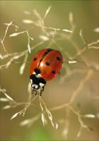 Ladybug_3 by Zoralysell