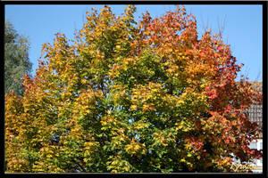 Rainbow Tree by Xeno834