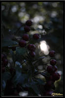Mood Berries 2 by Xeno834