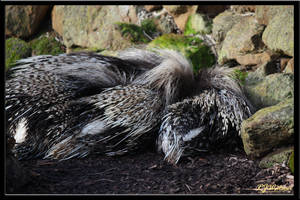 Crested Porcupines by Xeno834