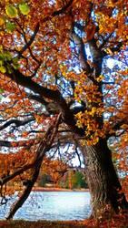 Autumn by WhulaHey