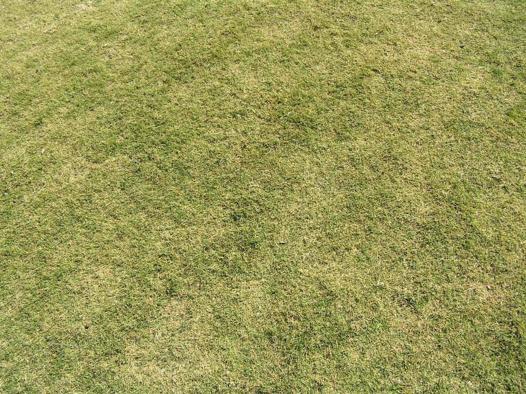 Grass is Grass by j-m-s