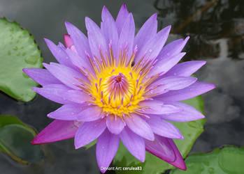 Lotus by Cerulea-blue