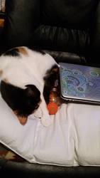 THis smells like my hooman, I'll sleep here. by medicinearrow