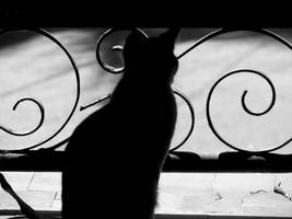 Catwatch by aashiks