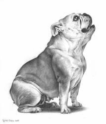 Hungry Bulldog by ZsofiaGyuker