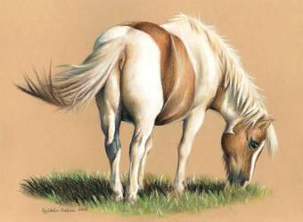 Grazing Pony by ZsofiaGyuker