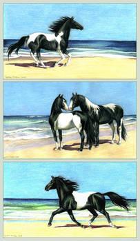 Pinto-series by ZsofiaGyuker