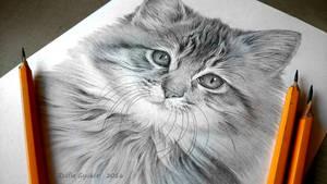 Little Miss Meow by ZsofiaGyuker