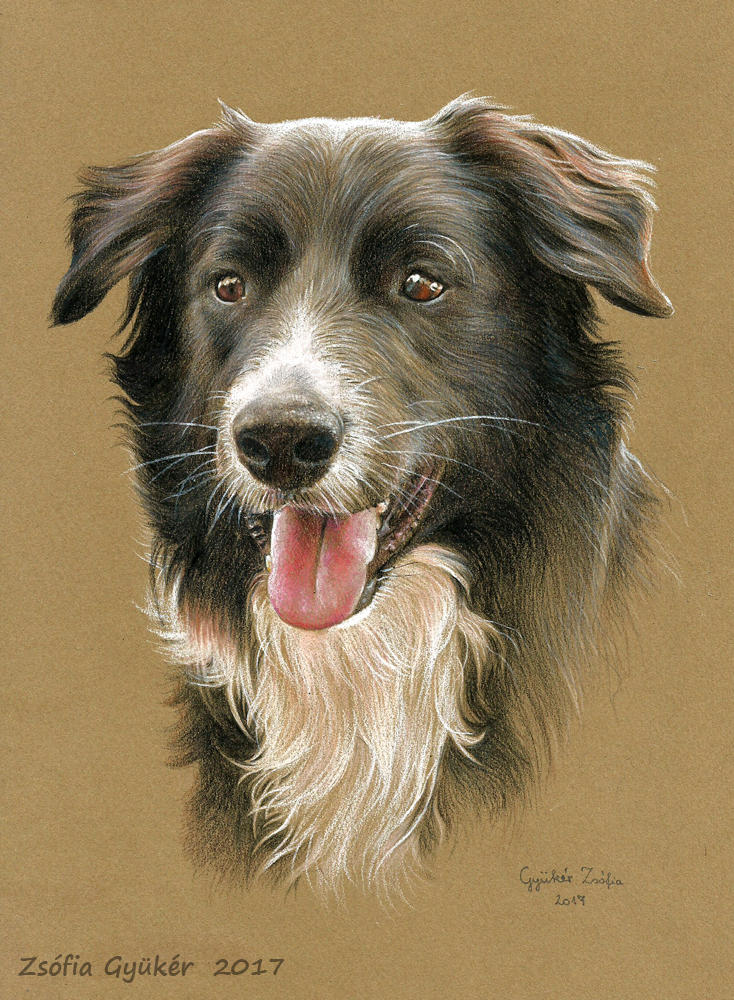 MUSZTANG the border collie by ZsofiaGyuker