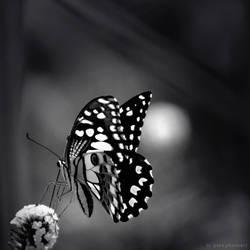 kupu-kupu by gazaahmad