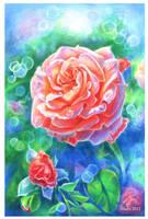 Rose 3 by Shnekokot