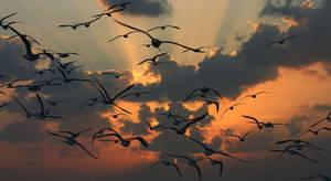 The Birds by sbadreddine