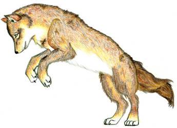 Jumping Wolf- Final by wolfsilvermoon