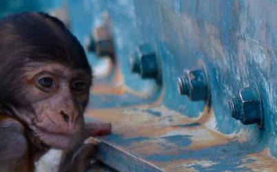 Monkeysee by pinballwitch