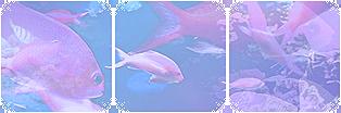 Fish   deco divider   f2u by Kimi-signature