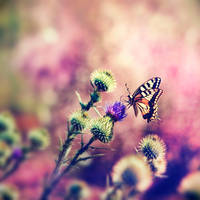 the butterfly's touch by mebilia
