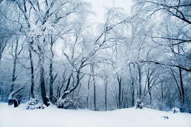 frozen forest by riskonelook