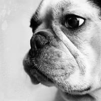 Bob my dog by Mcdbrd