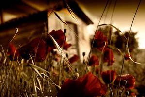 tulips and house by aykanozener