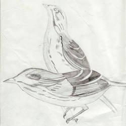 birds by NUKU