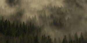 Simply forest by SwissAdA