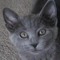 Mah Kitty Kiddle by XxSmileBrightxX
