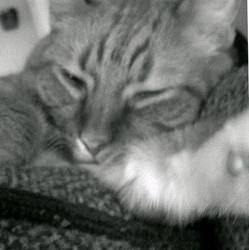 Feline King~ by XxSmileBrightxX