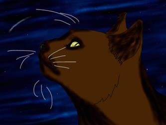 Cat ~ by XxSmileBrightxX