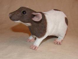 Dumbo rat sculpture by philosophyfox
