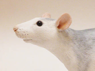Completed Commission Roan Fancy Rat Face by philosophyfox