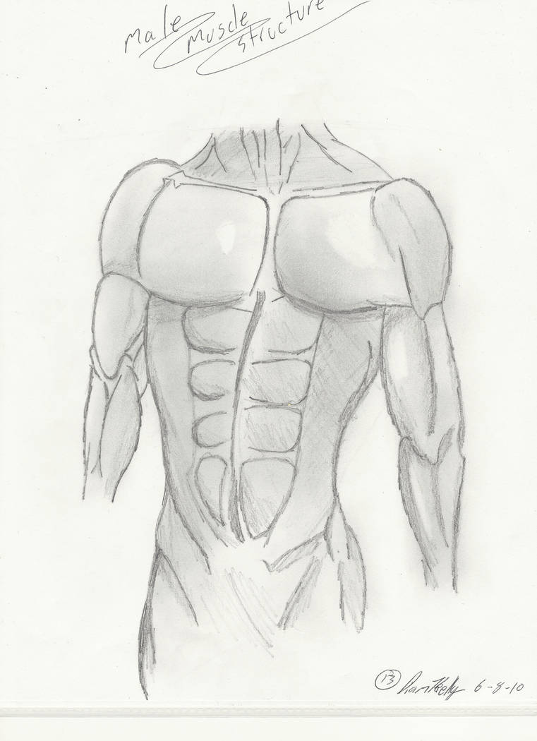 Muscle Structure By Monkeyjuice1 On Deviantart