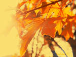 Fall into autumn by secdelent