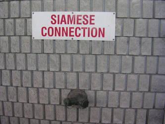 Siamese Connection by alex-kun