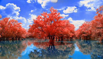 Red Trees by helios-spada