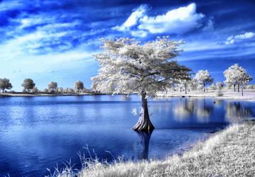 Lonely Tree by helios-spada