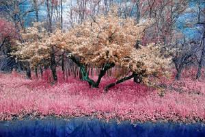 Spring Trail by helios-spada
