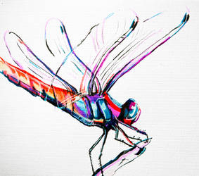 Prismatic Sight // Ink Dragonfly by Aerthemis
