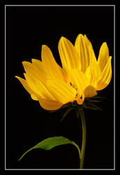 Flaming Flower by Anglo-Saxon