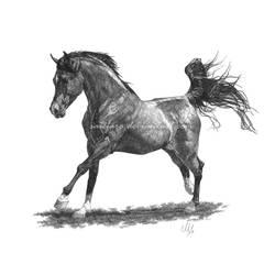 Arabian Horse by SaieFaro