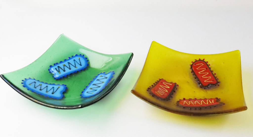 Rabies Virus Fused Glass Dishes by trilobiteglassworks