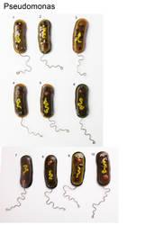 Pseudomonas Fused Glass Pins by trilobiteglassworks