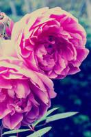 flowers by gollykaity