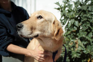 Adopt a Dog 1 by GaiaShirley