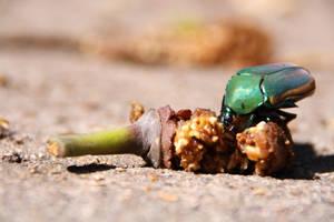 A Bug's Life by GaiaShirley