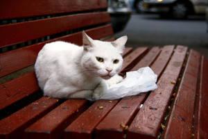 Homeless by GaiaShirley